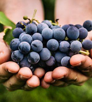 Kékszőlőmag